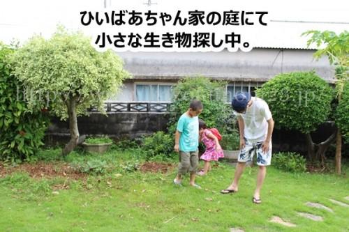 姪っ子、甥っ子と息子は小さな生き物が大好き。ひいおばあちゃん的な存在のおばちゃんのところでは庭で虫探しがはじまりました。