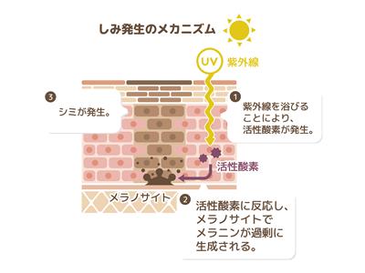 海外ブランドの化粧品開発は、シミのメカニズムをずーっと研究し続けてきた日本の技術には追いついていません。