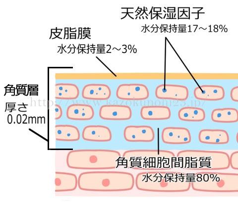 セラミド×天然保湿因子(NMF)