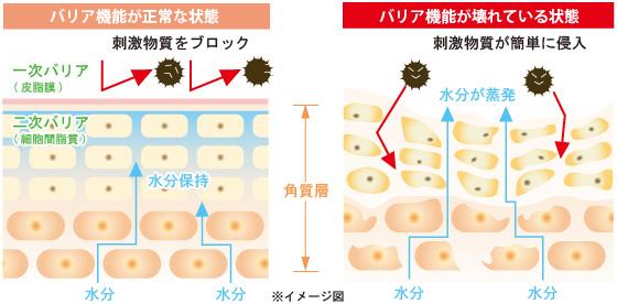 3大保湿因子が整った肌は、バリア機能が働きます。