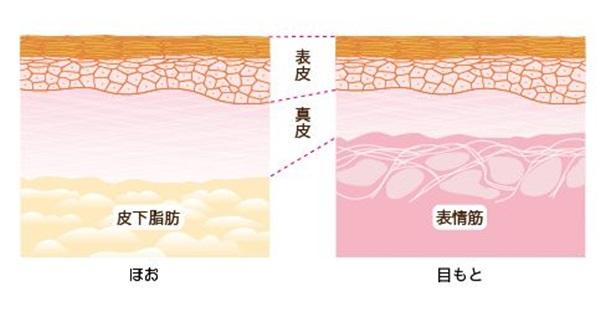 目元の皮膚が薄いのは、通常の肌は皮下脂肪との間の真皮層が厚みを持っているのに対して、表情筋との間の真皮が薄いからなんだそう。