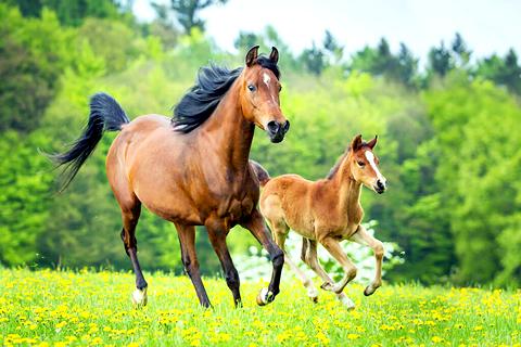 馬プラセンタの安全