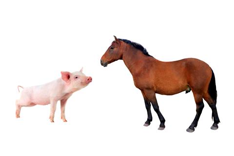 動物由来のプラセンタの安全性