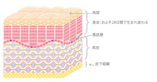 角層断面図