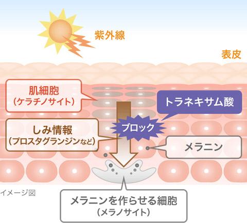 トラネキサム酸はアミノ酸の一種!