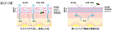 肌の乾燥によるバリア機能の低下