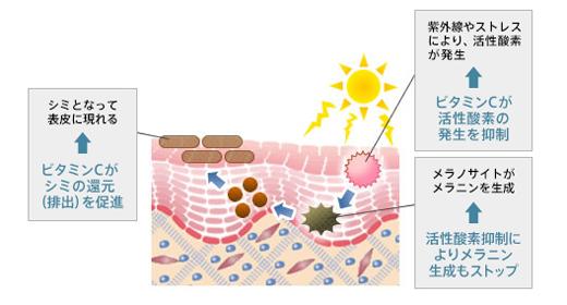 ビタミンC誘導体