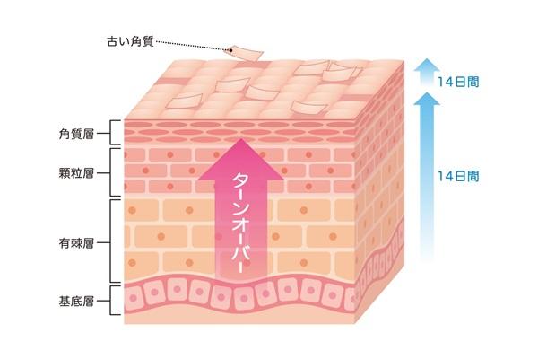 ターンオーバーを正常にする働きがある成長ホルモンのおかげで、美肌効果もあります。