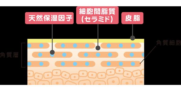 天然保湿因子・セラミド・皮脂