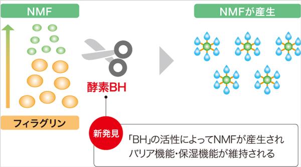 ブレオマイシン水解酵素