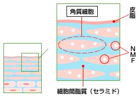角質細胞間脂質(セラミド)