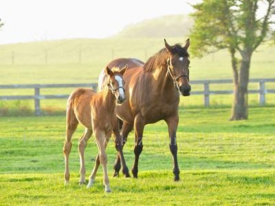 馬プラセンタは、体温が高い馬の胎盤が原料のため、菌が少ないとされています。