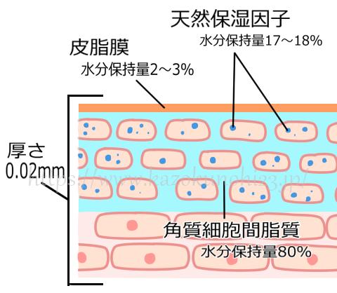 『細胞間脂質』が肌内部の水分量を維持