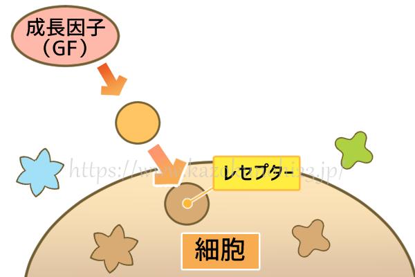 ヒト幹細胞コスメが効果的な理由とは?