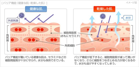 乾燥肌の開き毛穴の原因