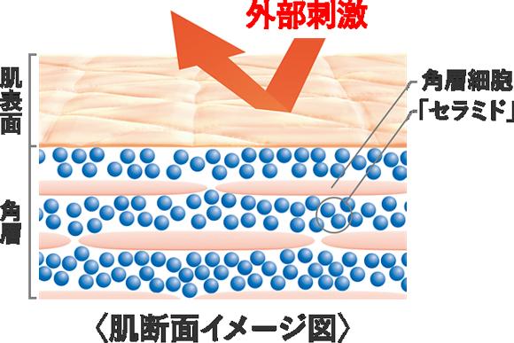 「肌を外部刺激から守る働き=バリア機能」のための必須成分