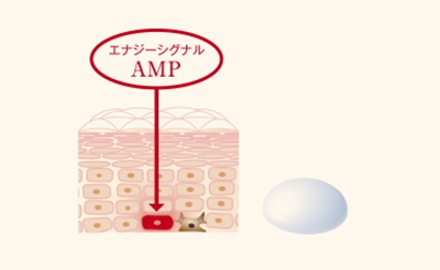 インナーシグナルの美白作用は、ターンオーバーを高めるというもの。少し変わっています。